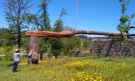 Escultor transforma árvore em obra de arte