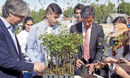 Município vai plantar 25 mil árvores até 2025