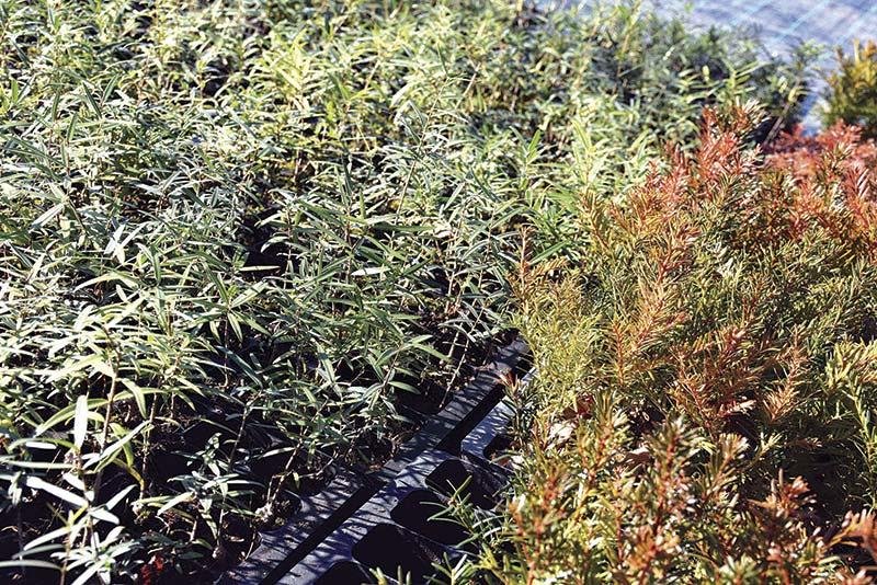 Mais de 2300 árvores para reabilitar território