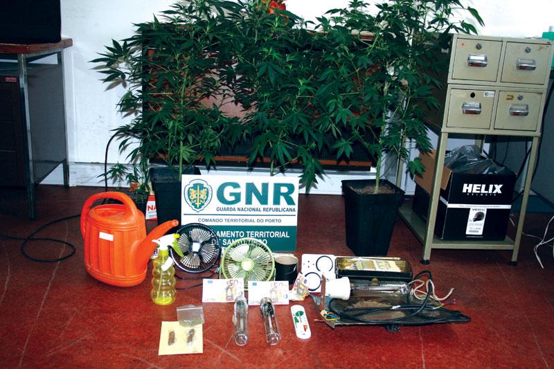 Jovem detido por posse de estufa de cannabis e répteis ilegais