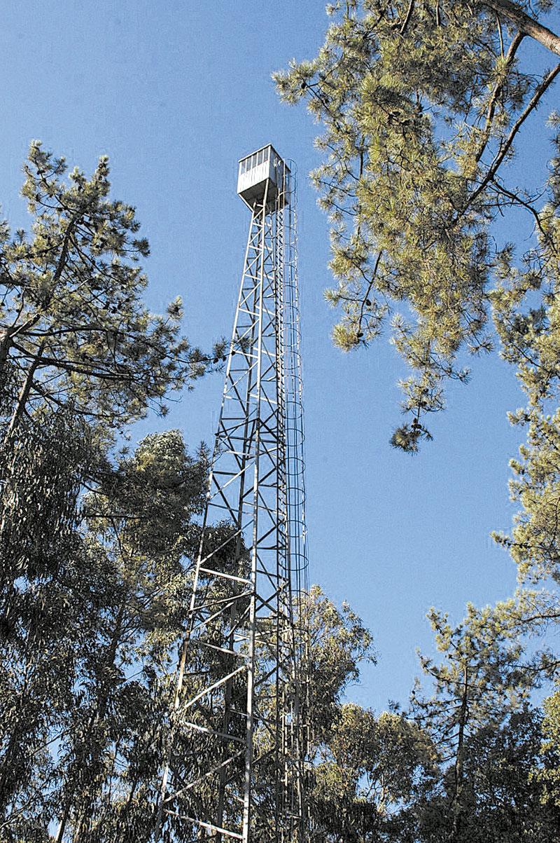Vigilantes garantem proteção da floresta famalicense