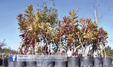 Famalicenses vão poder adotar árvores autóctones