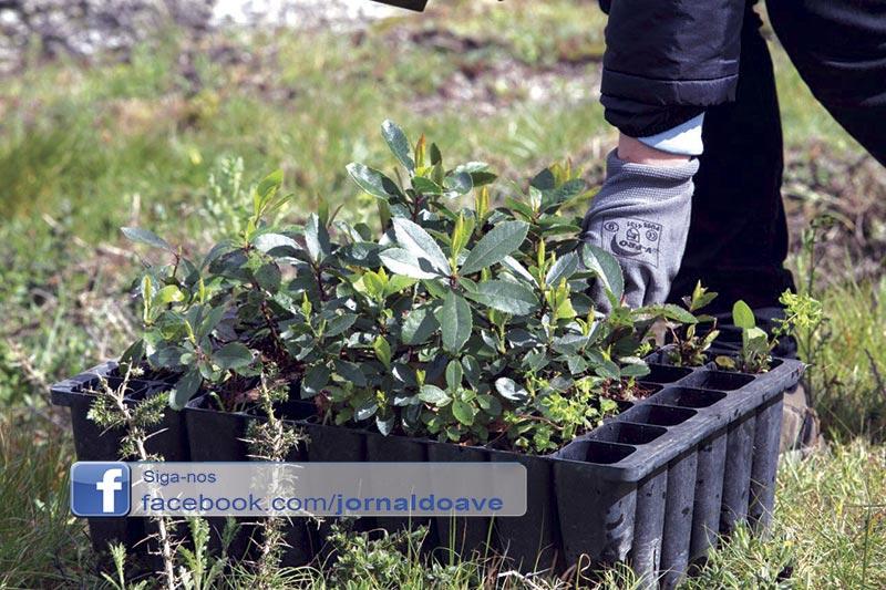 Município dá árvores e alerta para a importância da floresta