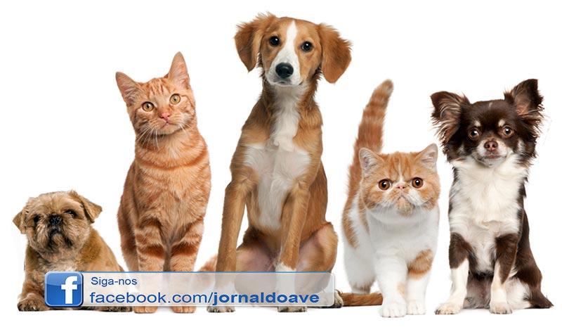 ASAAST proíbe adoção de animais durante época natalícia