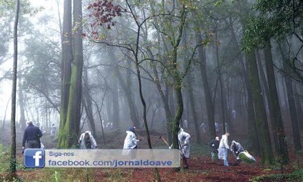 Município já plantou mais de 6700 árvores