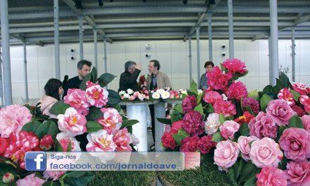 Camélias transformaram Fábrica de Santo Thyrso num jardim (C/Vídeo)