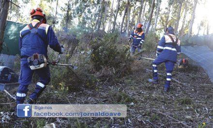 Equipa para proteger a floresta cresce para 20 elementos permanentes