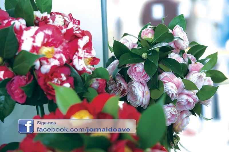 Santo Tirso festeja o Dia das Camélias