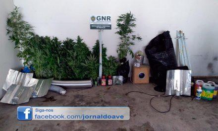 GNR encontra estufa de canábis em Delães