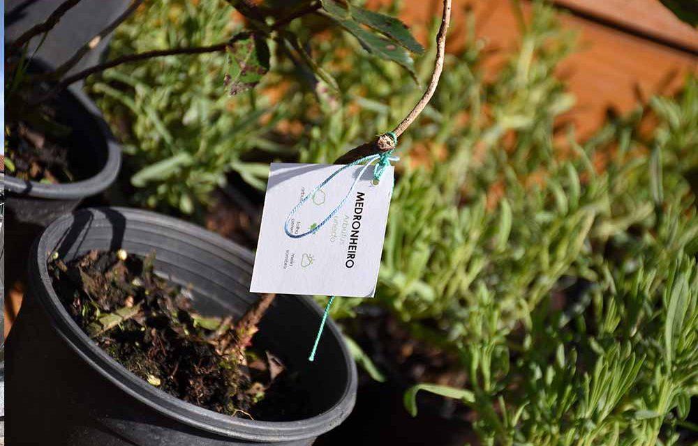 Campanha de adoção de árvores realiza-se este sábado, nos Paços do Concelho de Famalicão