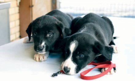 Câmara apoia famílias no tratamento de animais