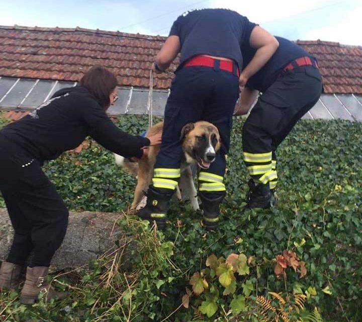 Bombeiros de Riba de Ave salvam cão e gato
