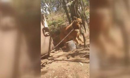 """MP diz não ser cruel ter animais em abrigo """"sujo, com lixo e dejetos"""" em Santo Tirso"""