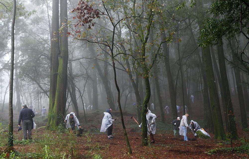 Mais de 100 voluntários vão reflorestar o Monte Padrão