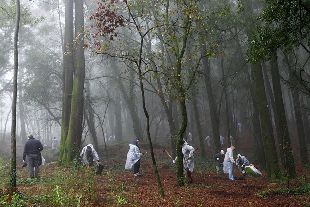 Plantação-de-Árvores-Monte-Padrão