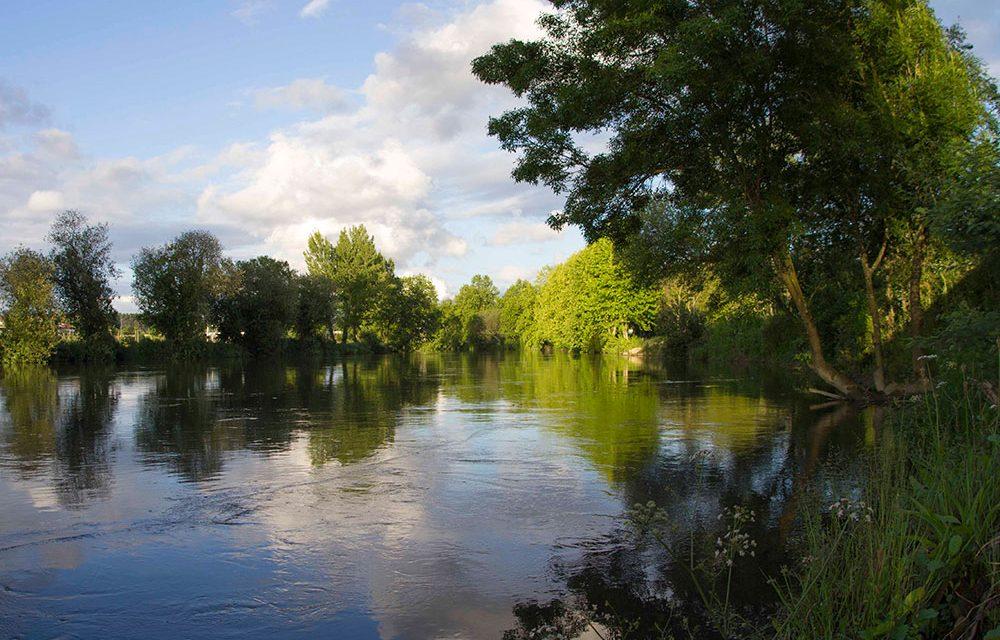 Famalicão quer criar uma reserva protegida para aves migratórias no baixo Ave
