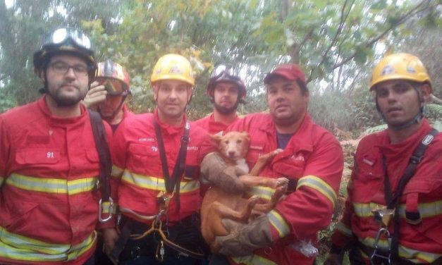 Bombeiros de Famalicão salvam cão numa mina com 7 metros
