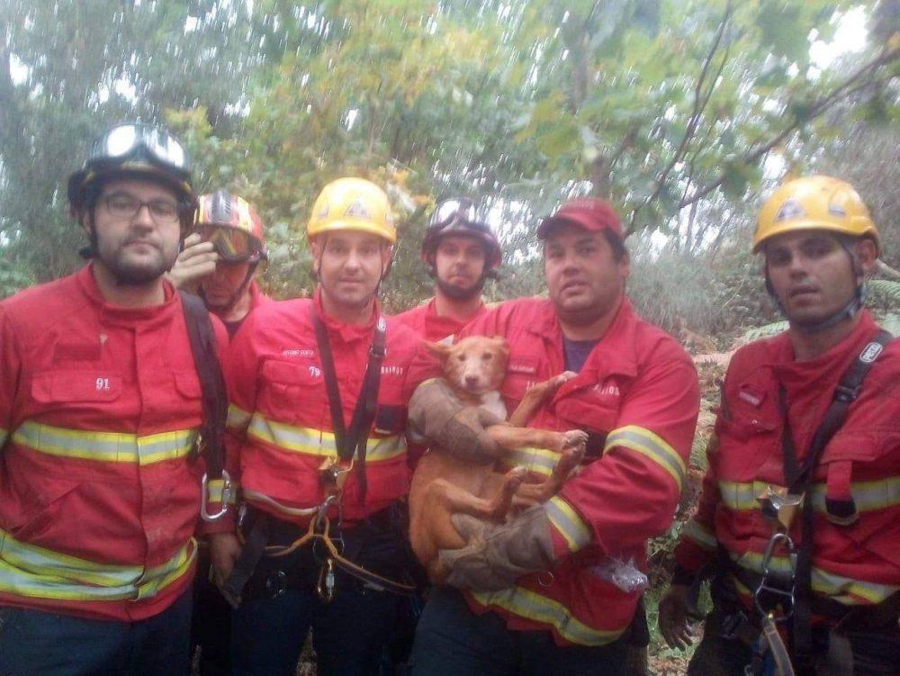 Salvamento ocorreu em S. Simão de Novais