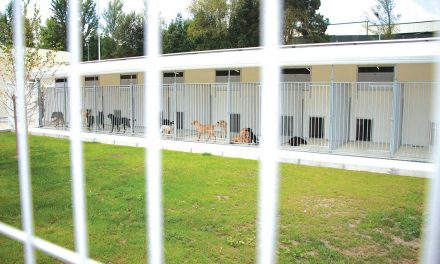 """""""Rondas"""" dá a conhecer canil municipal"""