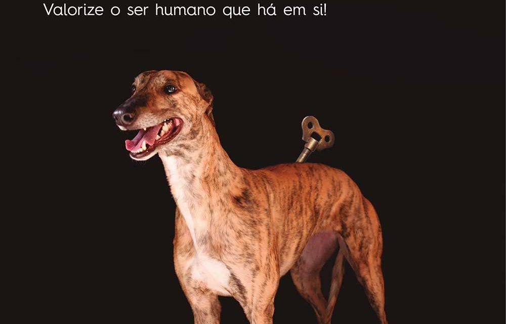 Famalicão lança campanha contra o abandono dos animais