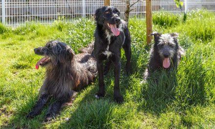 Mais de 300 animais adotados no Canil/Gatil Municipal de Santo Tirso