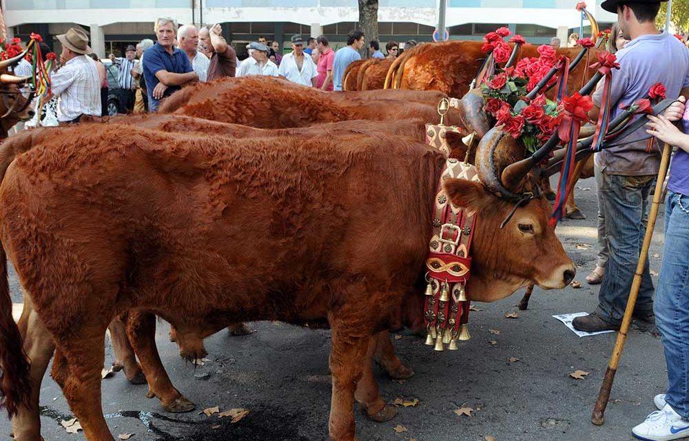 Feira Grande de S. Miguel revive tradições ancestrais e promove produtos da terra