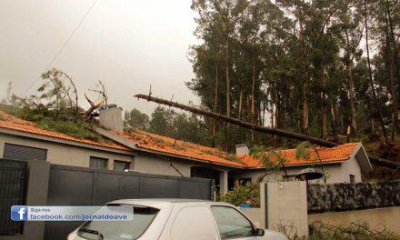 Video▶ Queda de árvores destrói habitações e desaloja oito pessoas