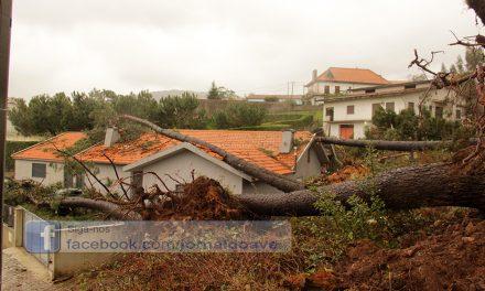 Desalojados em Santo Tirso devido à queda de árvores