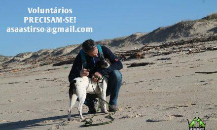 Associação de Animais de Santo Tirso procura voluntários