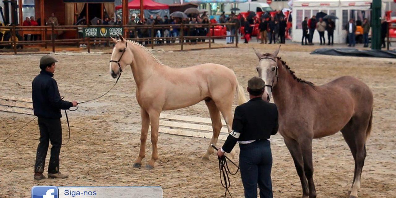 cavalos-feira-anual-da-trofa-1280×640