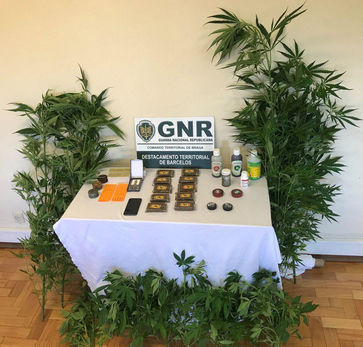 GNR Braga – Apreensão cannabis